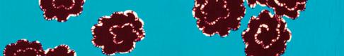 trenner-1140_620x102_transparent